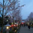 夕暮れ時の鎌倉の桜🌸