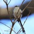 森林公園の梅と福寿草とロウバイ野鳥他2019