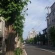 今日の京都。昼から曇天!