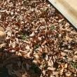 落ち葉で焼き芋できたらええのに・・・