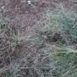 白菜の植え付け場所の準備
