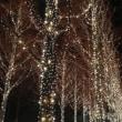 京都で、4度目のメリークリスマス !
