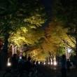 北大ラン~2018秋(昼と夜)