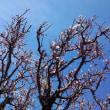 《短歌》春を喜ぶ