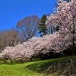 春はもう直ぐ・・・