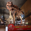 博物館で化石を見てきました