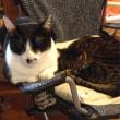 薪ストーブに群がる猫