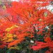 あの燃えるような紅葉をまた見に行きたい・・・圧巻だった永観堂