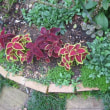 豪雨の後の庭。