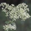 ナナカマドの実や散策路に咲く花‥