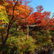 昭和記念公園の紅葉2017