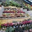寄せ植え体験 IN 広島市植物公園