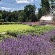 ナショナル・トラスト所有の自然保護区域の博物館、新しくオープンした付属の庭園のちり紙の花