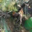 豊後梅にかぶさった クリの木の枝を切ったよ 180222