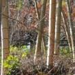 玉露の里椿園 & 十輪寺の白モクレン 2