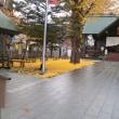 札幌まちなか探検隊  イチョウの絨毯@北海道神宮頓宮