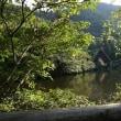 ё ほおが白くみえる野鳥、ホオジロの姿、ドキドキ眺め ё M池(岐阜県岐阜市)