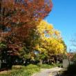 鶴舞公園の紅葉