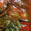 出石城跡の紅葉