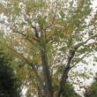 桂という香木
