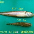 笑転爺の釣行記 8月21日☁☀ 浦賀港岸壁