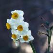 袖ヶ浦公園で見た花