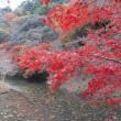 房総の紅葉を楽しむ旅(続き)