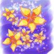 熱帯の花 プルメリア