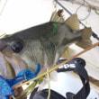 10月21日沖釣りのまとめ。