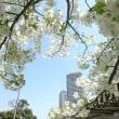 【スタッフの部屋】桜満開🌸✨