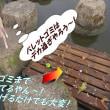 明智光秀・・Warring States Japan Akechi MitsuhideNHK大河ドラマ