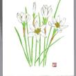 清々しい 白い花が 心に 染み入る