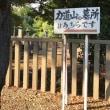 池上 Ikegami
