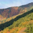 横川渓谷への道