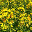 『春の色』 蜜蜂