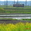 新幹線こまちと菜の花
