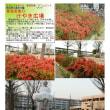 シンボル・キャラクター その140  SEED OF PEACE(平和の種) 東鷲宮東口けやき広場