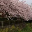昨年の志井川