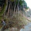 根子岳・見晴新道 11月28日(火)