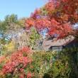 我が家の庭が秋色・自然のサイクルを楽しみながら春を待ちます