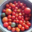 山盛りミニトマト