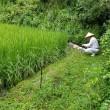 検診と草刈り