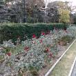 本日は関西文化の日・博物館など一斉に無料開放・家の近くの長居植物園と長居自然史博物館へ。大阪自然史フェスティバルの西宮貝類館のブースでホラ貝吹きに挑戦。全く鳴らず。