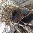 あと少し  カラスの巣撤去  オイル交換  冬囲い撤去  花の移植他  陽太
