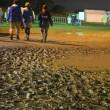 訂正あり◆聴いた音楽のこと ―Rising Sun Rock Festival 2018 in Ezo (ライジングサン・ロックフェスティバル)