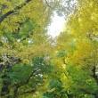 上野から東大構内へと・・こさのぼ散歩