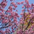 丸亀城の桜はもうすぐです