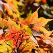 少しづつ葉っぱが色づいてきました(^o^)