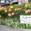 アンネのバラ in 土山駅