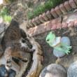 猫と池とカエル